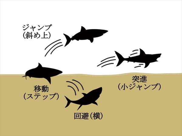 陸上でのサメの操作